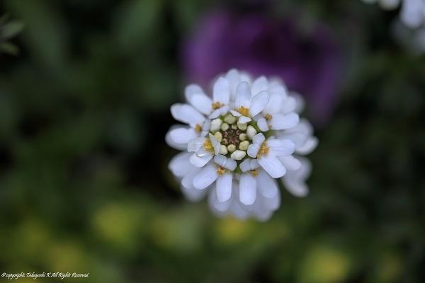 5D4_9419.jpg